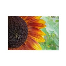 Summertime Sunflower Close Up Rectangle Magnet