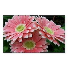Beautiful Pink Gerbera Daisy Rectangle Decal