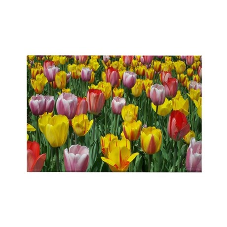 Beautiful Spring Mixed Tulip Rectangle Magnet (100