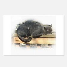 Jonesy Sleeping Postcards (Package of 8)
