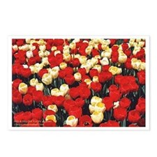 Red and Yellow Tulips Postcards (Package of 8)