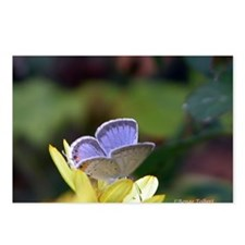 Blue Butterfly (Eastern Tailed Blue) Postcards (Pa