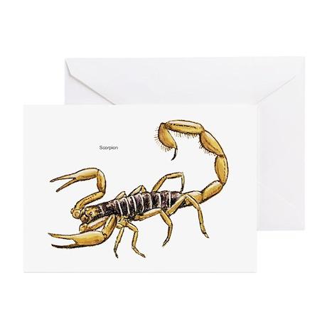 Scorpion Greeting Cards (Pk of 10)