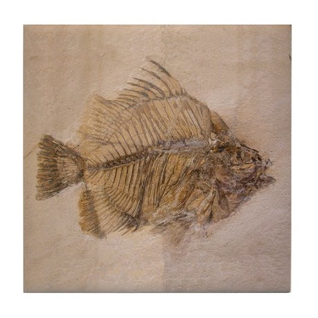 Fish Fossil Art Tile Coaster