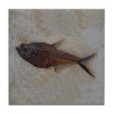 Fish fossil Drink Coasters