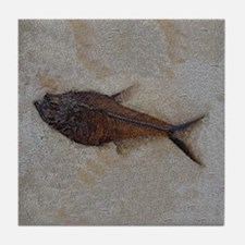 Fish Fossil #3 Art Tile Coaster