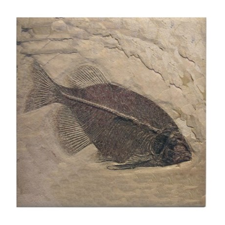 Fish Fossil Rock Ceramic Art Tile Coaster