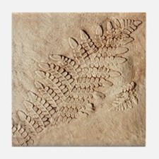 Fern Fossil Art Tile Coaster