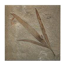 Fossil Image Art Tile Coaster 3-Leaf Fossil