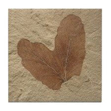 Fossil Image Art Tile Coaster Double Leaf