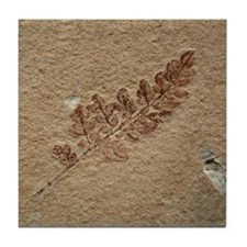 Fossil Image Art Tile Coaster Brown Fern