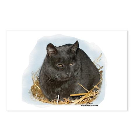Jonesy the Chartreaux Cat Postcards (Package of 8)