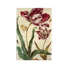 Tulip Diana by Merian Rectangle Magnet