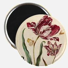 Tulip Diana by Merian Magnet