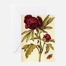 Peony by Merian Greeting Card
