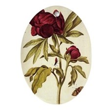 Peony by Merian Oval Ornament
