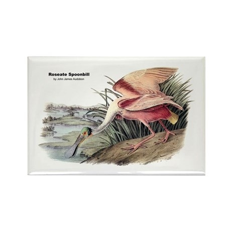 Audubon Spoonbill Bird Rectangle Magnet