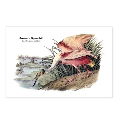 Audubon Spoonbill Bird Postcards (Package of 8)
