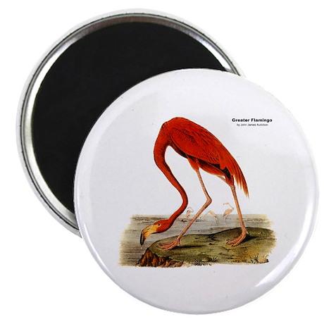 Audubon Flamingo Bird Magnet
