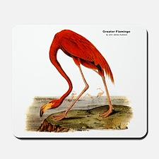 Audubon Flamingo Bird Mousepad