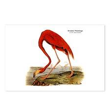 Audubon Flamingo Bird Postcards (Package of 8)