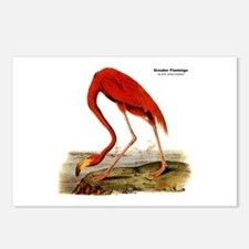 Audubon Flamingo Bird Postcards (Package of 8)