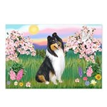 Blossoms / Collie (tri) Postcards (Package of 8)