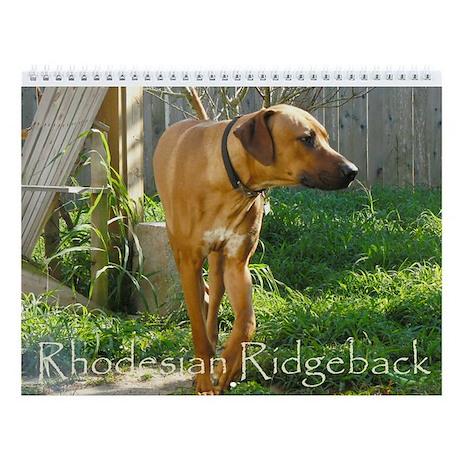 12 months of Ridgeback