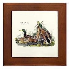 Audubon Mallard Ducks Framed Tile