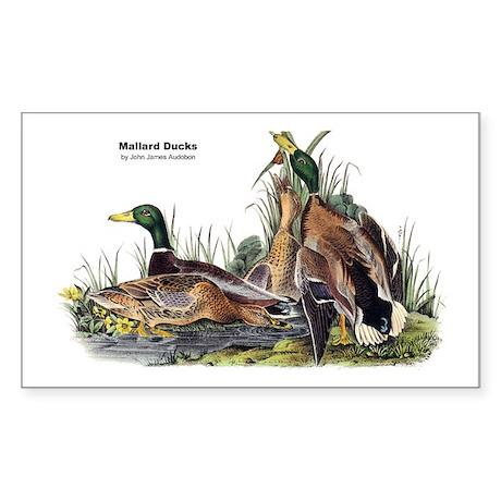 Audubon Mallard Ducks Rectangle Sticker