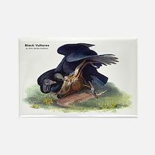 Audubon Black Vultures Bird Rectangle Magnet