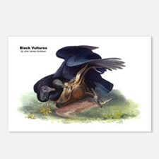 Audubon Black Vultures Bird Postcards (Package of