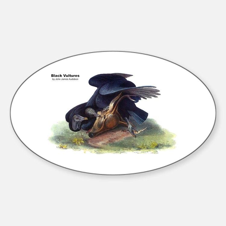 Audubon Black Vultures Bird Oval Decal