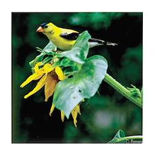 Goldfinch 2- Tile Coaster