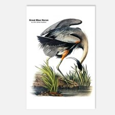 Audubon Great Blue Heron Postcards (Package of 8)