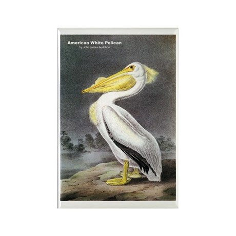 Audubon American White Pelican Rectangle Magnet