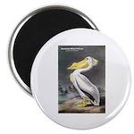 Audubon American White Pelican Magnet