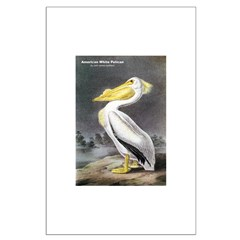 Audubon American White Pelican Posters