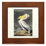 Audubon American White Pelican Framed Tile