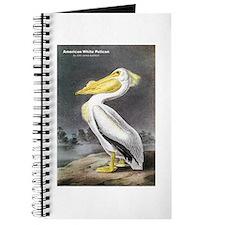 Audubon American White Pelican Journal