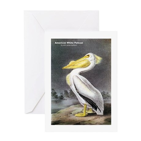 Audubon American White Pelican Greeting Card