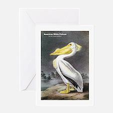 Audubon American White Pelican Greeting Card