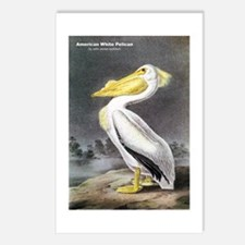Audubon American White Pelican Postcards (Package