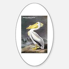 Audubon American White Pelican Oval Decal