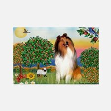 Appletrees / Collie (s) Rectangle Magnet (10 pack)