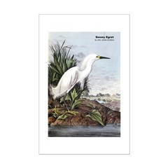 Audubon Snowy Egret Bird Posters