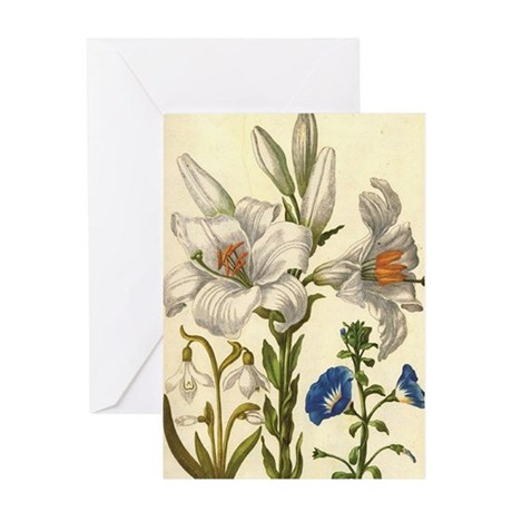 Madonna Lily by Merian Greeting Card