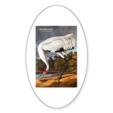 Audubon Whooping Crane Bird Oval Decal