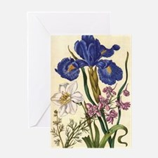 Larkspur by Merian Greeting Card