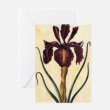 Iris by Merian Greeting Card